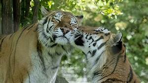 Marwell Zoo  Winchester