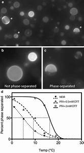 Isolation Of Giant Plasma Membrane Vesicles For Evaluation