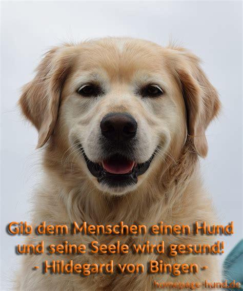 Lustige Hunde Bilder Mit Spruchen Kostenlos Downloaden Jongrive