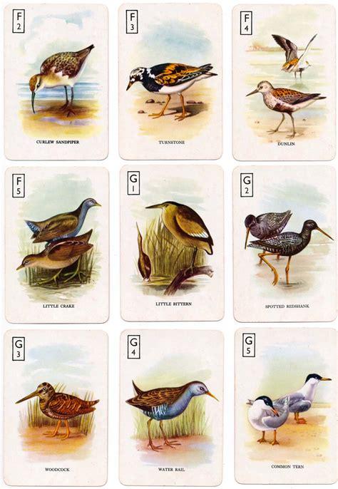 british birds  world  playing cards
