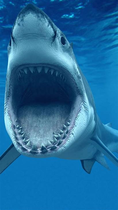 Shark Wallpapers Megalodon Sharks Tiger Iphone Animals