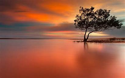 Tree Peaceful Arboles Sunset Wallpapers Reflejos Lonely