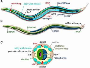 A Transparent Window Into Biology  A Primer On