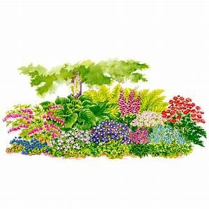 Pflanzen Für Nordseite : stauden sortiment bl tenpracht im schatten von g rtner p tschke ~ Frokenaadalensverden.com Haus und Dekorationen