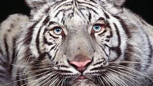 10 Rarest Animals On Earth That May Be Gone Soon - YouTube