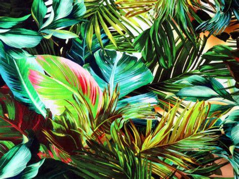 tissu jersey viscose elasthanne imprime tropical