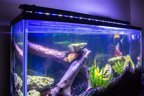led fish tank lights how to go green when keeping a fish tank at home