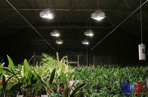 greenhouse led grow lights 30 best images about indoor gardening grow lights on