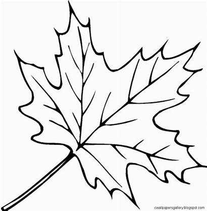 Leaves Autumn Coloring Pages Drawing Leaf Fall