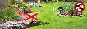 Katzen Garten Vertreiben : hunde katzenschreck led hunde katzenschreck led hund ~ Michelbontemps.com Haus und Dekorationen