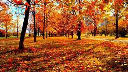 Autumn Fall 3d Season Landscape Tree Leaves