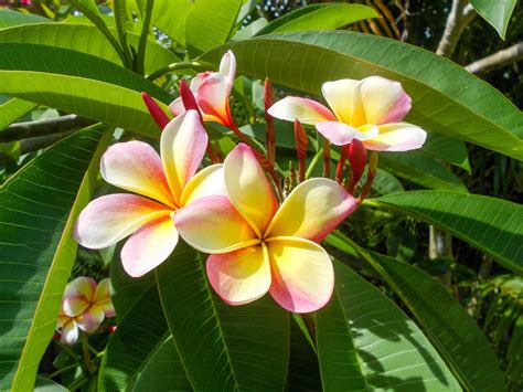 6 iconic tropical flowers that will make you think of ...