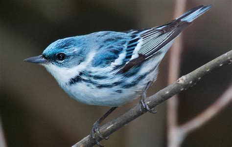 birds audubon minnesota