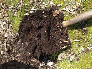 buy garden soil the best soil you never to buy growing in my