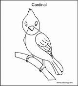 Coloring Cardinal Pages Bird Printable Birds Printables Summer Books Colouring Crafts Cardinals Cost Winter Realistic Ws Colorings Woodland Creatures Getcoloringpages sketch template