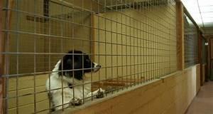 diy outdoor dog kennels