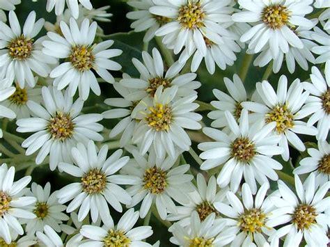 Yellow Wallpaper: White Flowers