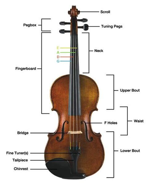 Images About Parts The Violin Pinterest