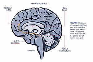Mind Matters  Teacher U0026 39 S Guide