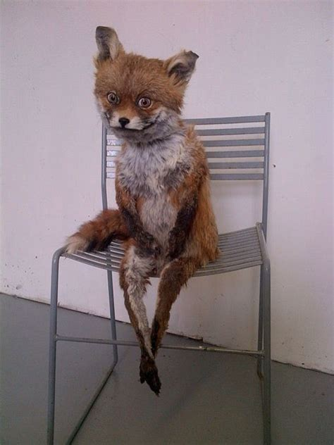 Taxidermy Fox Meme - 43 best images about fox on pinterest bad taxidermy the morning and image search