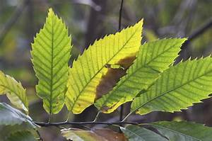 Identifying Plant Leaves  Information On Leaf Types And