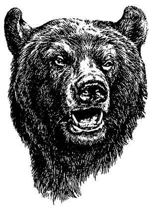 Missing Bear Head | Bear sketch, Bear drawing, Bear art