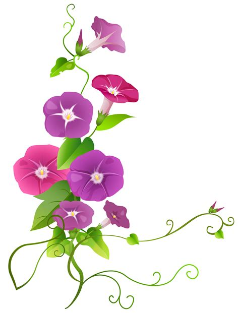 decorative boxes ipomoea flower transparent png clip image gallery