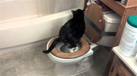 cat using citikittie toilet ring 3