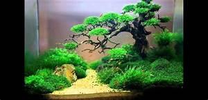 Aquarium Dekorieren Ideen : aquarium ideas aquarium ideen id es aquarium youtube ~ Bigdaddyawards.com Haus und Dekorationen