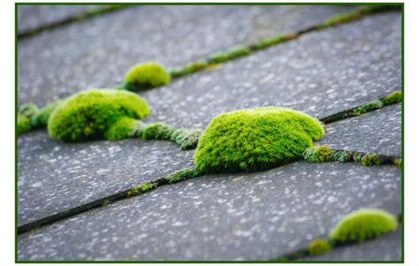 How To Remove Moss From A Roof Red Roof Inn San Antonio Riverwalk Reviews Best Rv Replacement Kit Metal Underlayment Canada Roofing Contractors Santa Barbara Ca Daniels Supply Mobile Al Spring Valley And Gutters Moss Treatment For Tiles Permits In New Jersey