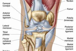 Front Of The Knee Diagram