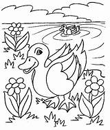 Duck Coloring Pages Coloringpages1001 sketch template
