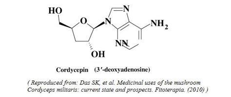 cordyceps scientific review  usage dosage side