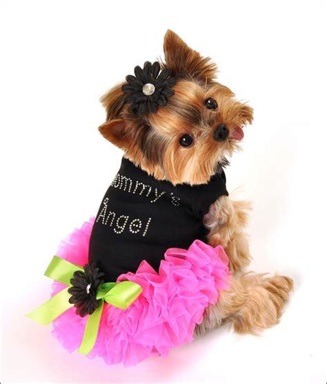 animals  clothes images  pinterest cutest