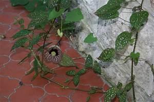 Marc De Café Plantes D Intérieur : des plantes d 39 int rieur spontan es ~ Melissatoandfro.com Idées de Décoration