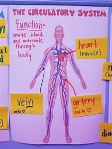 Body Systems Study Guide Pdf