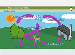 Section 4 Presentation Bundle