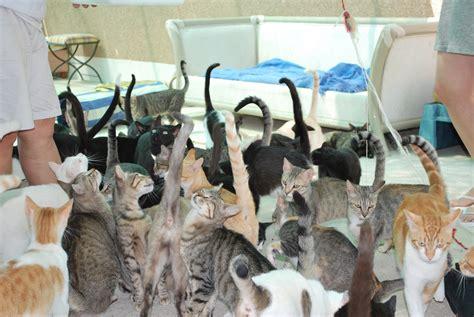 zuhause gesucht katzen spanien hundeblicke ev