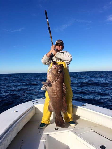 bass sea bluefish fishing groupers tiles report fish fishtrack november