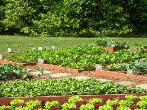 small backyard vegetable garden layout myideasbedroom
