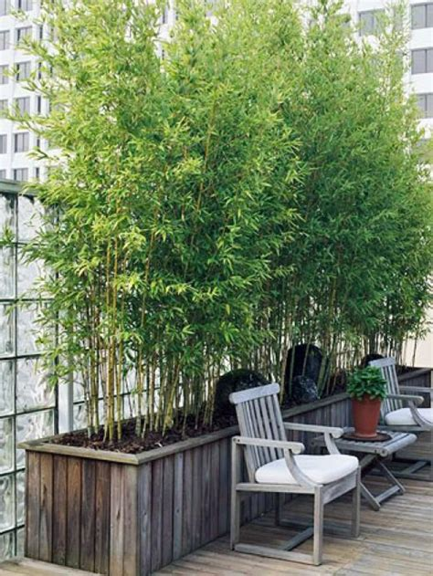 pen s sun loving container plants for roof garden screen