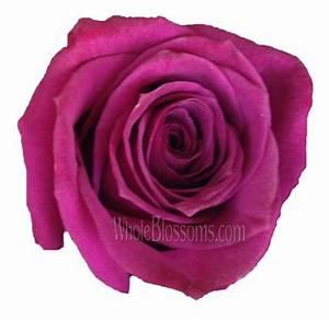Wholesale Princess Hot Pink Rose in Bulk Wedding Flowers