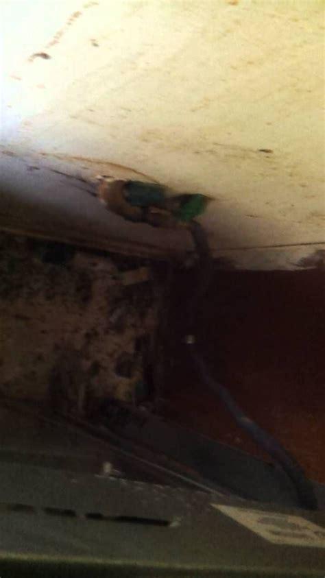 infestation problem roach pest