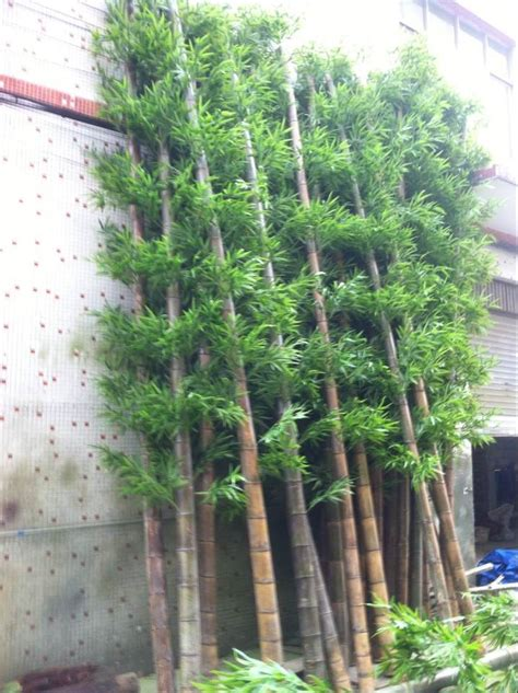 landscape bamboo plants customized outdoor 800cm artificial bamboo fake tall bamboo for swimming pool wall landscape