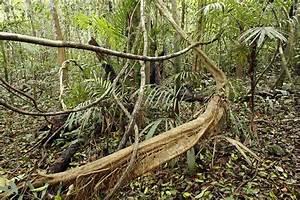 Rainforest Undergrowth - Stock Image - C001  9692