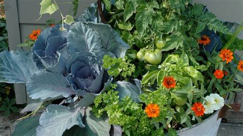 Plant Flowers And Vegetables