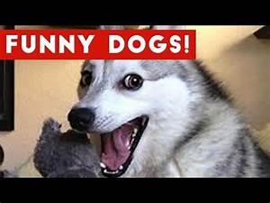 Funniest Videos 2017