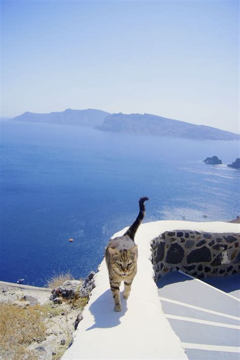 Cat In Santorini Greece Beautiful Sky Scenery
