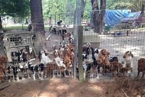 Fundraiser by Brittney Wilk : Cavalier Puppy Mill Auction