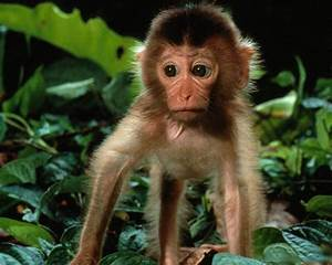 Unique Animals blogs: Baby Monkey Wallpapers, Monkey Baby ...